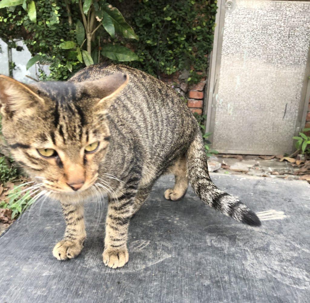 猫村の猫1